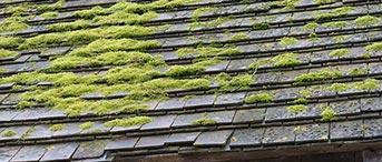 toiture végétalisée dans la Haute-Garonne pas cher