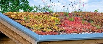 devis toiture végétalisée en Alsace